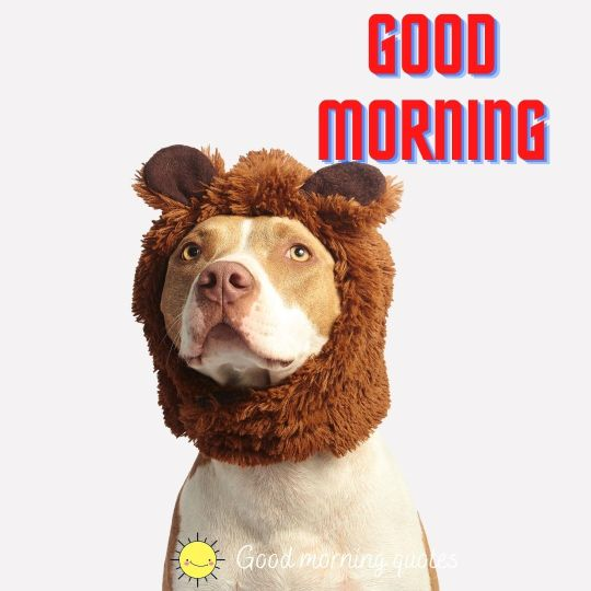 crazy good morning images