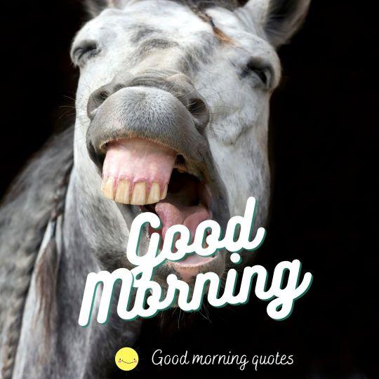 good morning funny animals pics