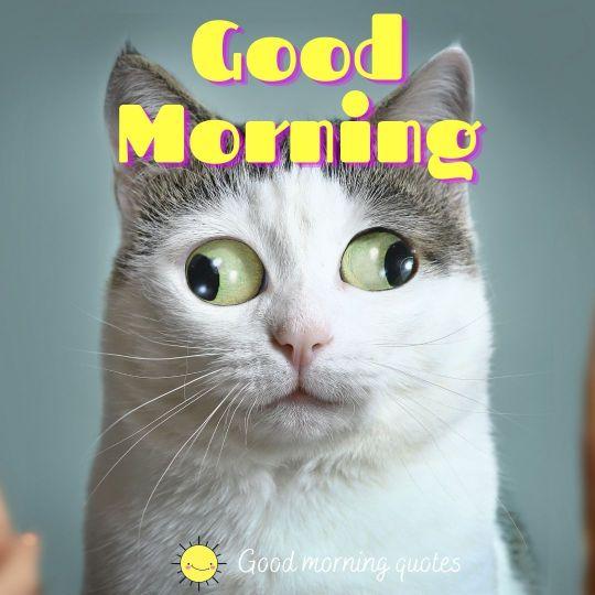 interesting good morning images