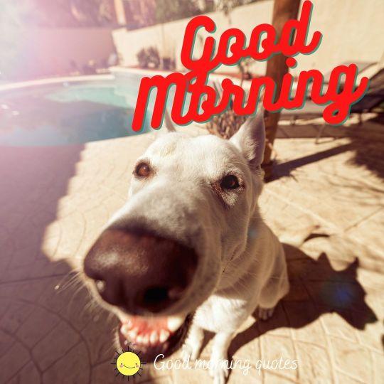 funny dog good morning