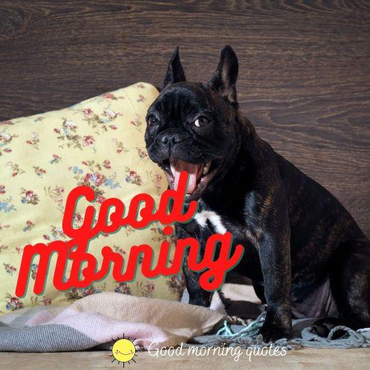 good morning funny dog images