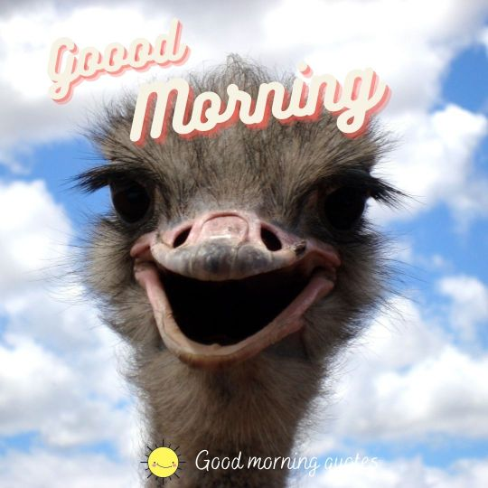 good morning cool images