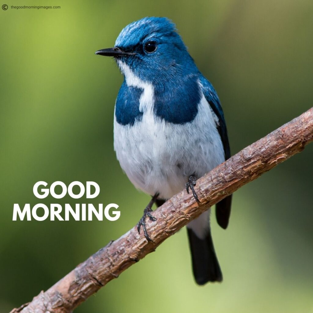 good morning images with birds hd
