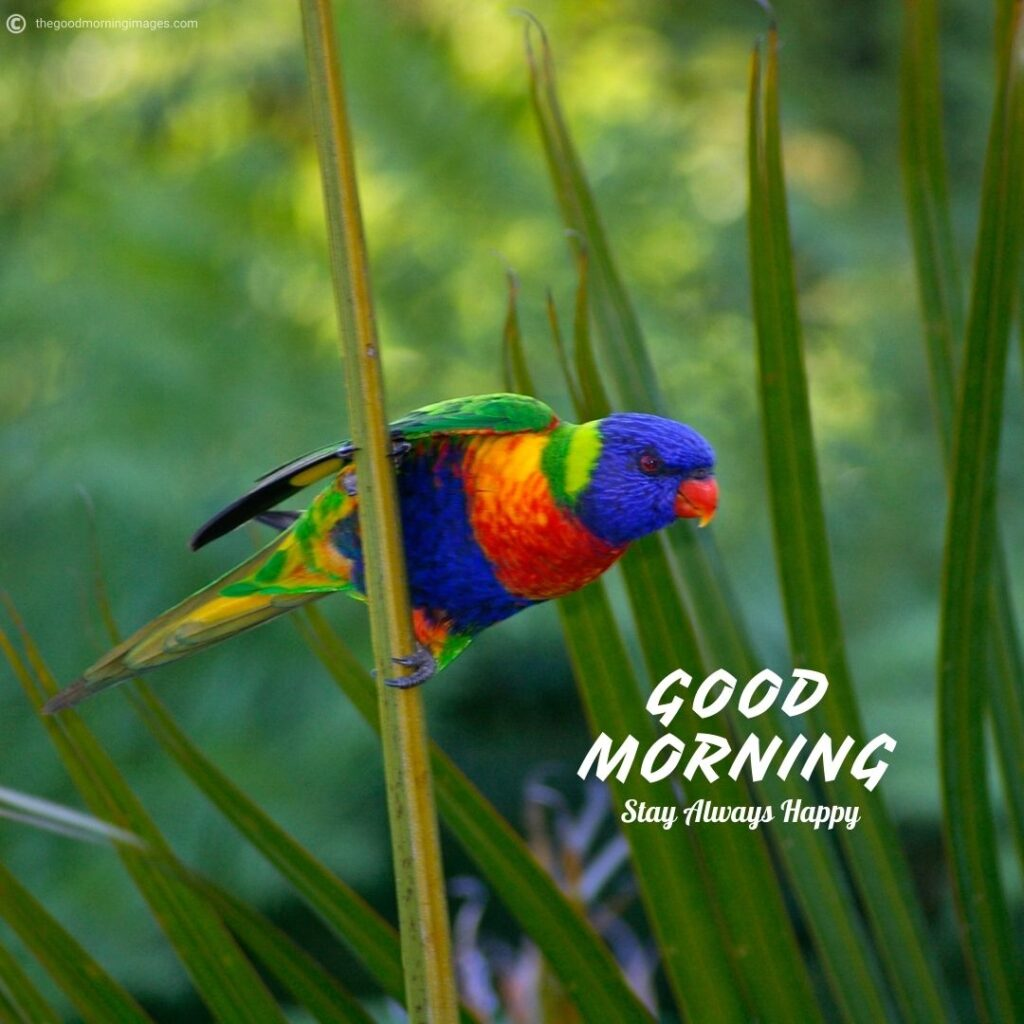 good morning images with beautiful birds hd