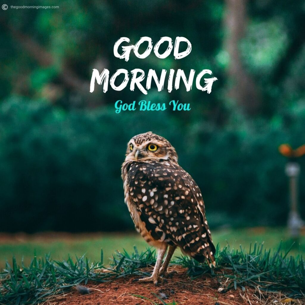 good morning owl images