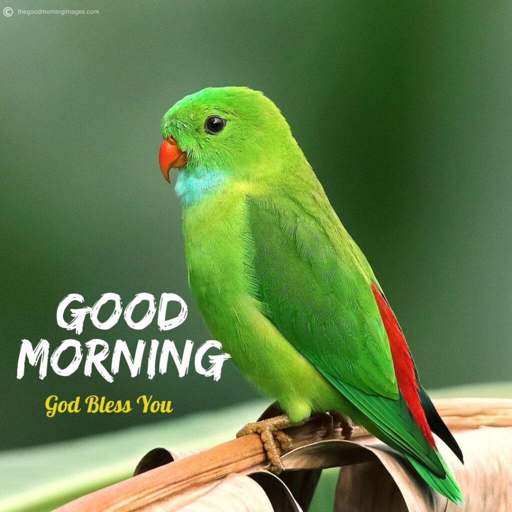 good morning images with parrots