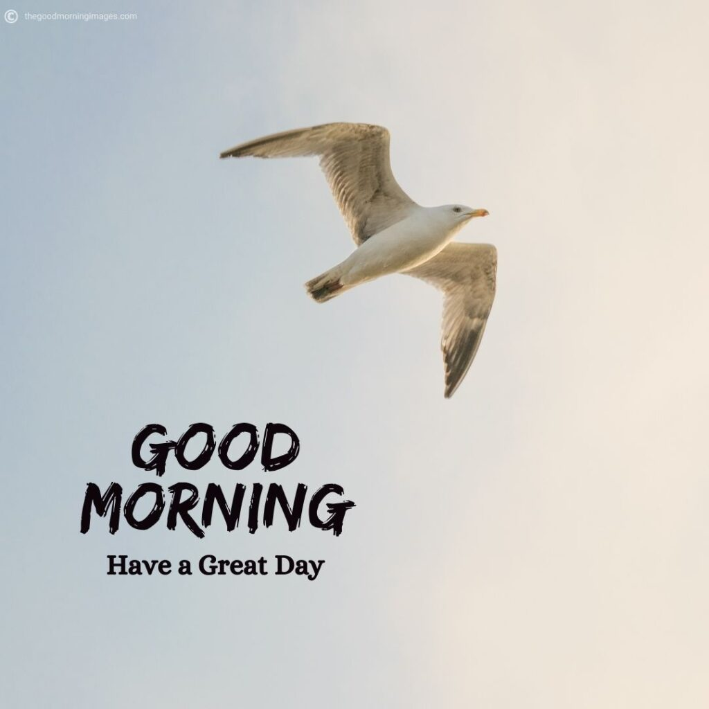 flying birds good morning images