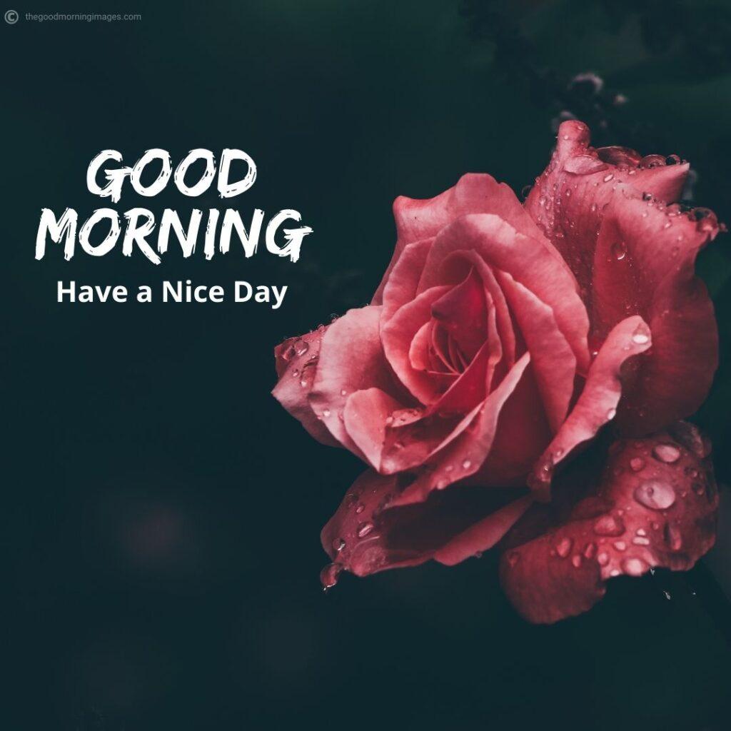 Good Morning flowers pics