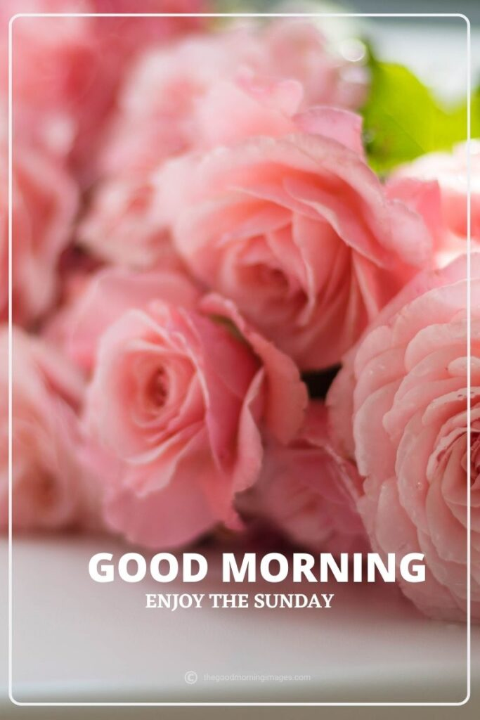 good morning sunday pink flowers pic