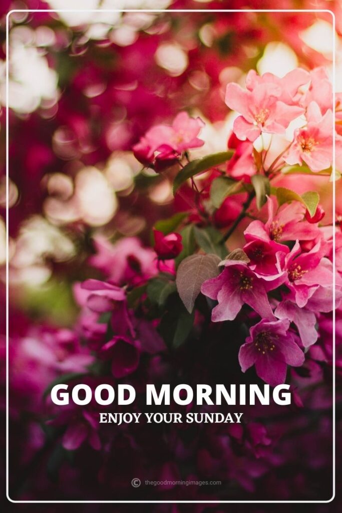 good morning sunday images flowers