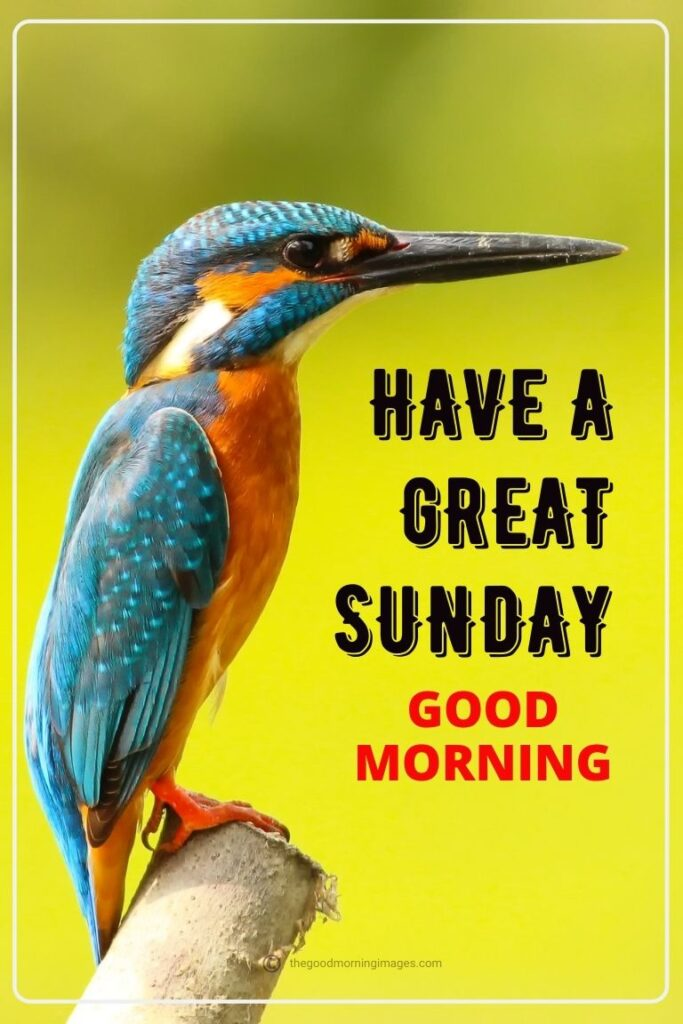Good Morning Sunday Images birds pic