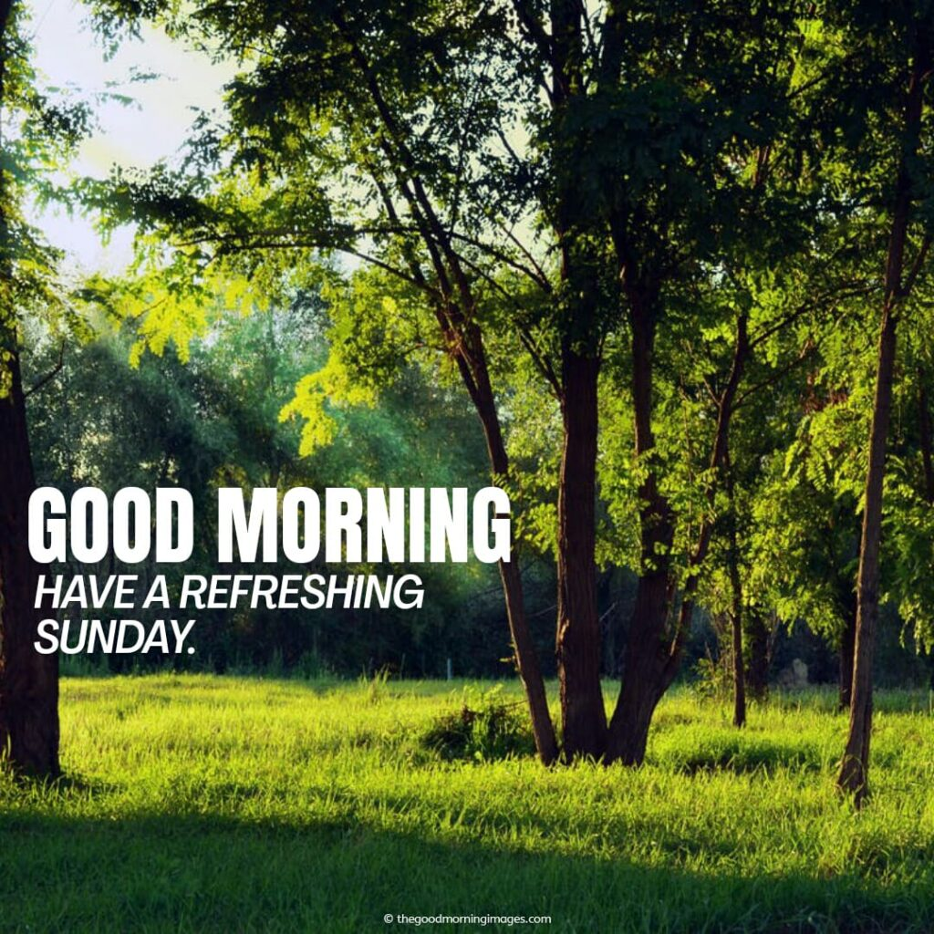 nature that refresh your Sunday morning