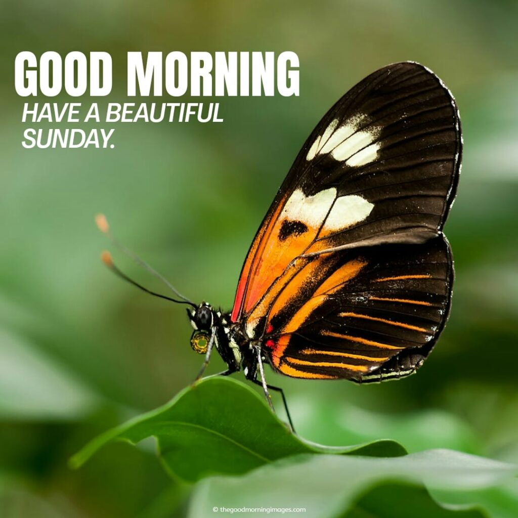 amazing pic of good morning with butterfly