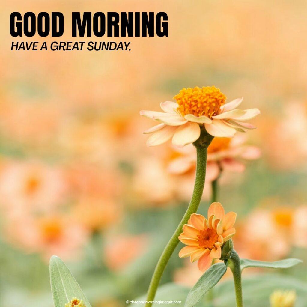 Sunday Good morning flowers pics