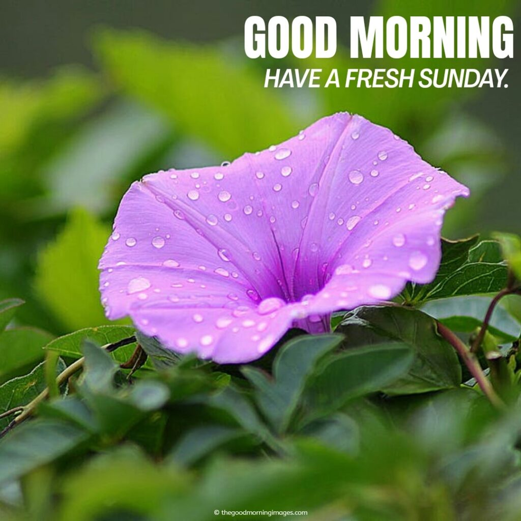 enjoy your sunday with purple flower