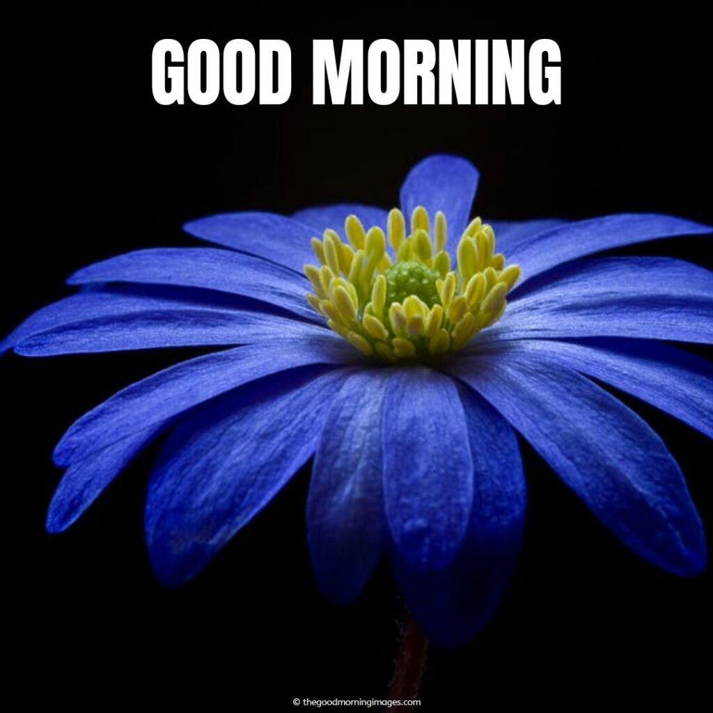 good morning sunday with blue flowers