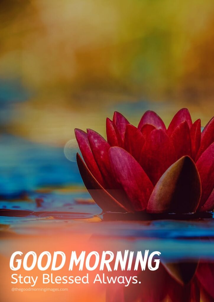 Good Morning lily Flowers Images