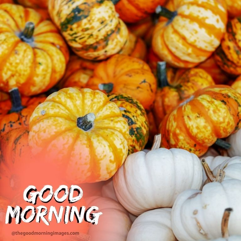 good morning fall images with pumpkin