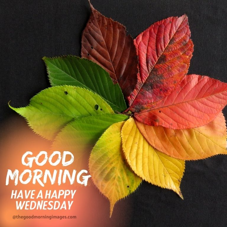 good morning Wednesday fall images