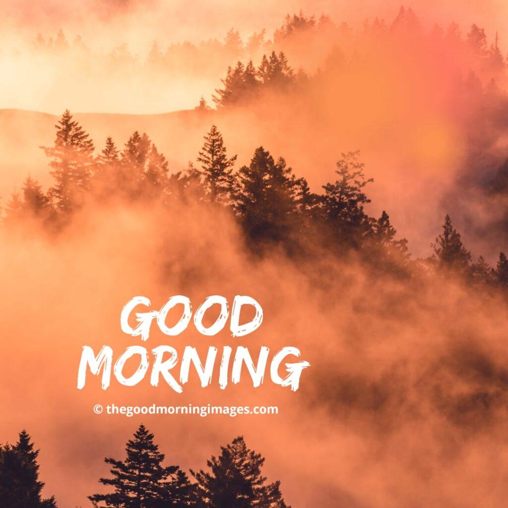 good morning photos with nature