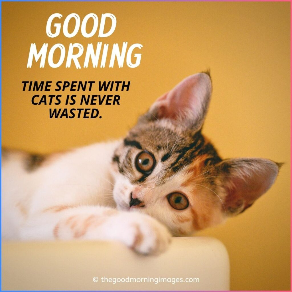 Good Morning Kitten with quotes images