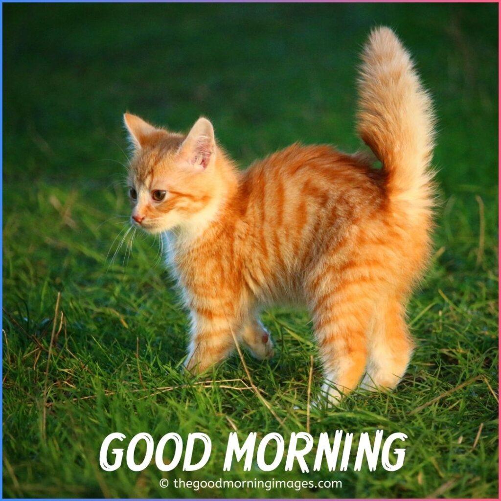 good morning kitten images