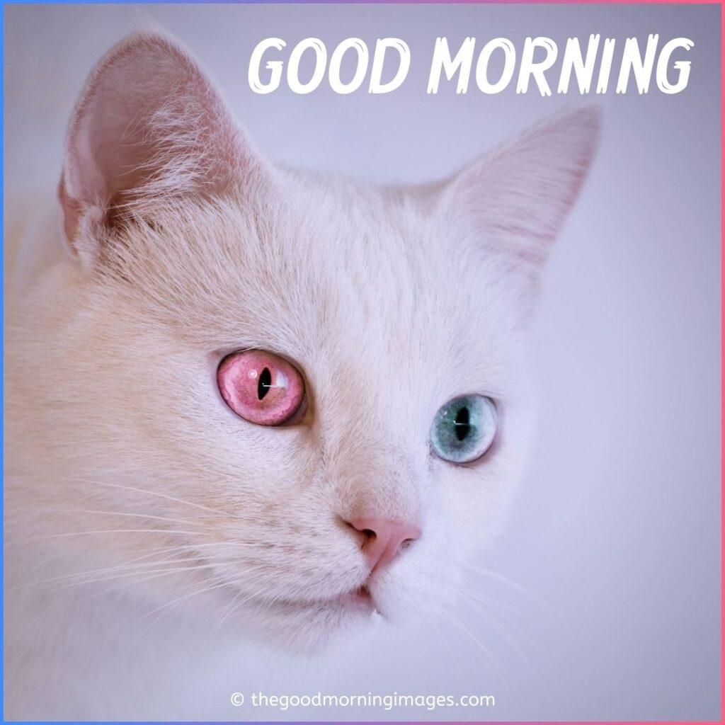 pink eyes kitty morning pic