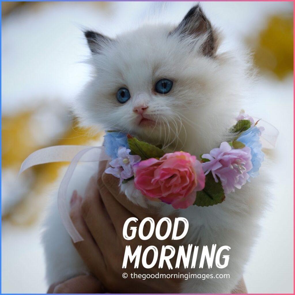 lovely cute kitten or cat images for good morning