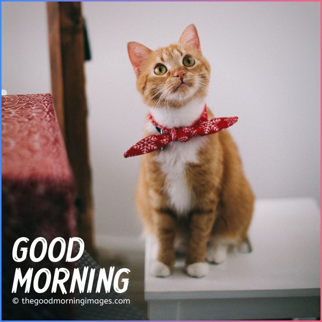 good morning cat love images