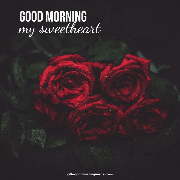 Good Morning deep red rose Sweetheart Images
