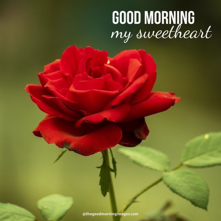 Good Morning Sweetheart Images with red rose