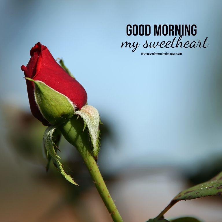 Good Morning Sweetheart with rose Images