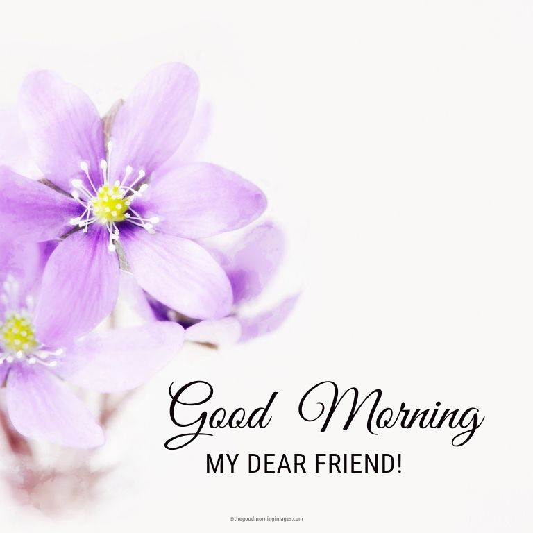 morning friends images