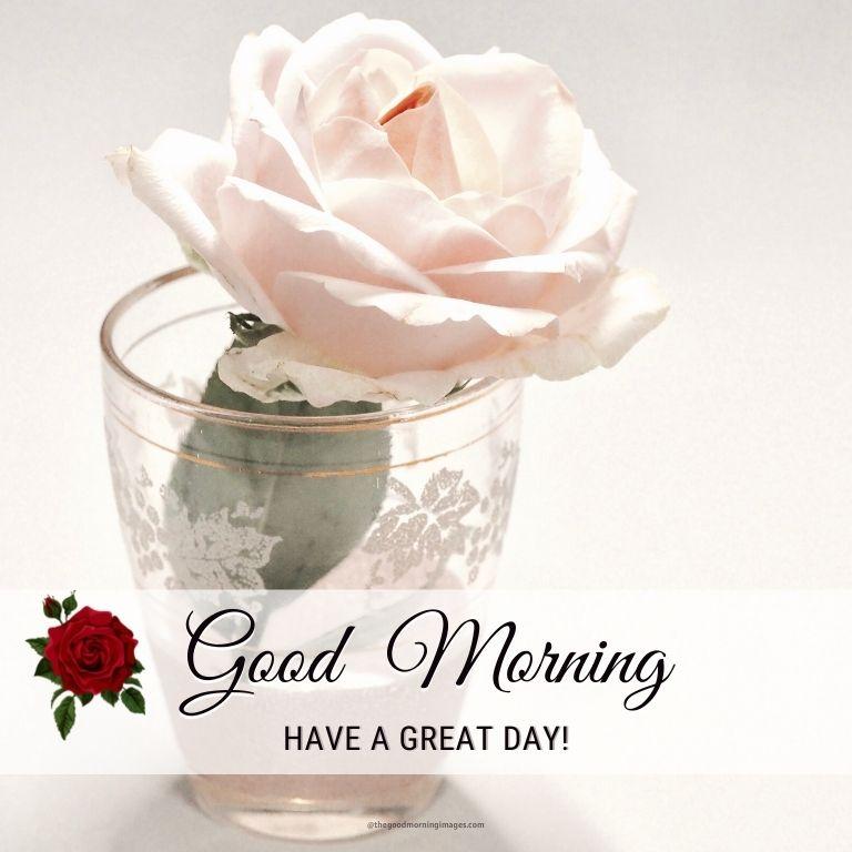white rose good morning images