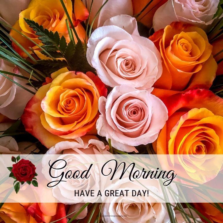 rose good morning images