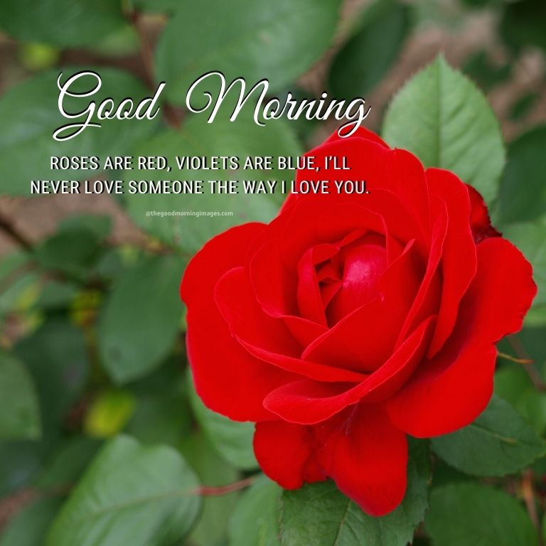 good morning with roses quotes