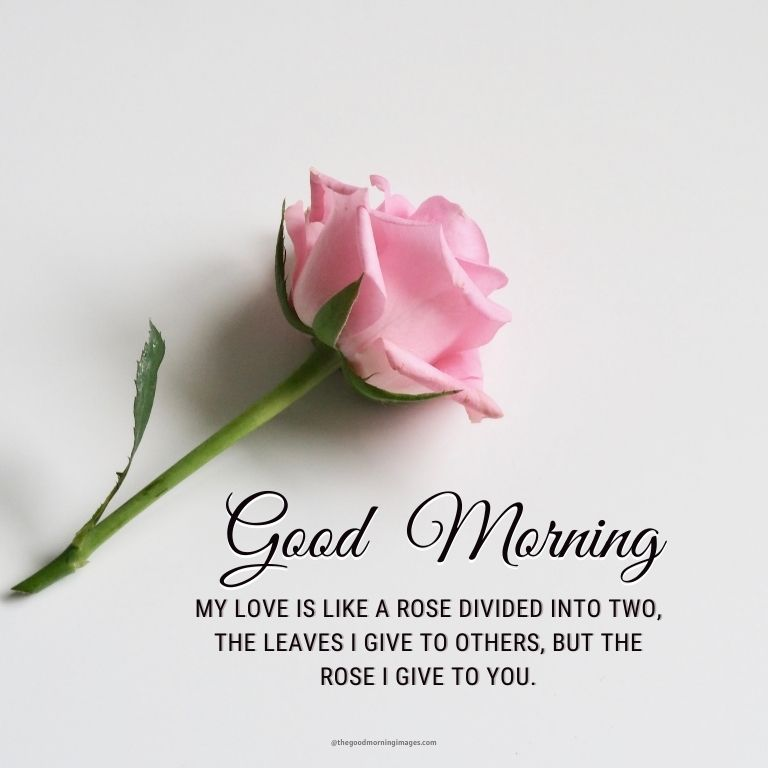 good morning rose love images with quotes