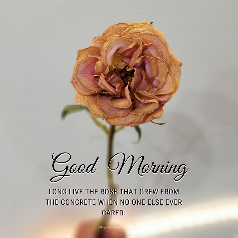 good morning rose images with wishes