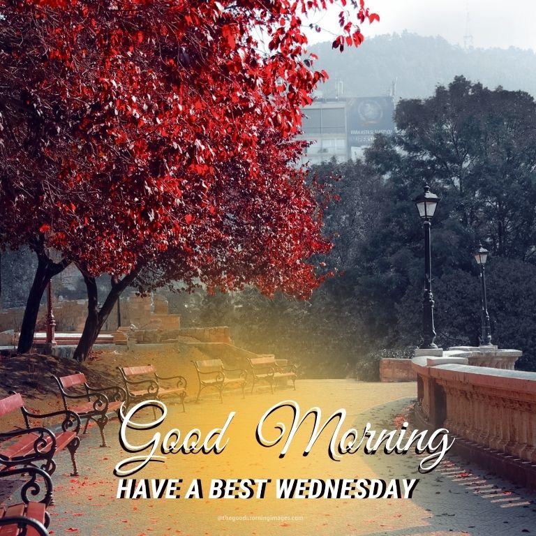 Good Morning Best Wednesday Img