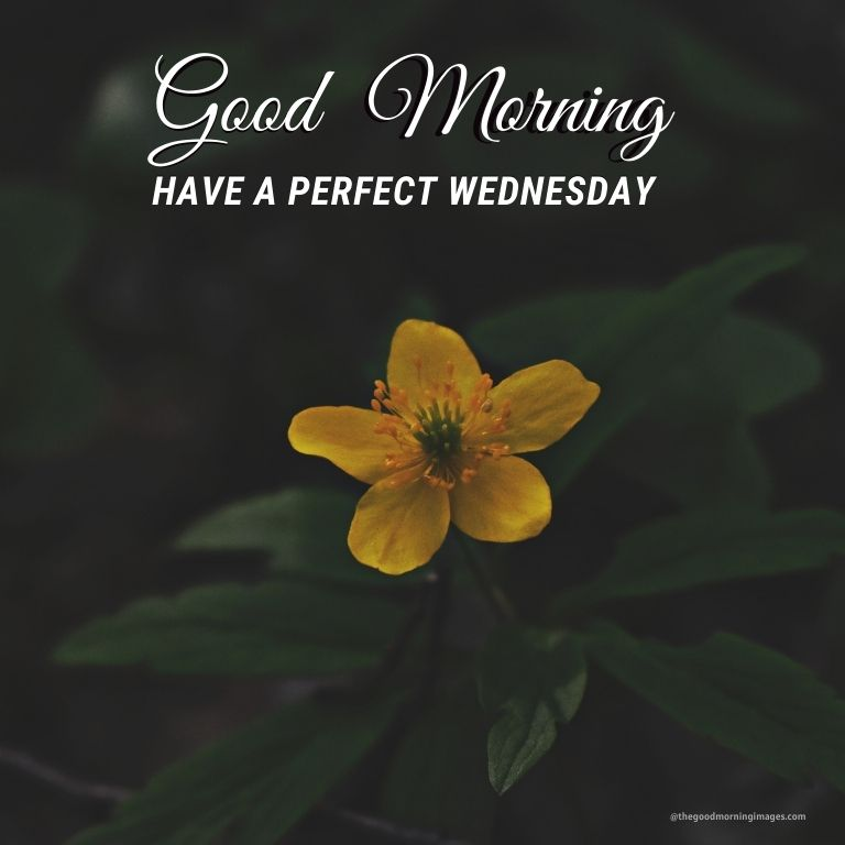 Good Morning Wednesday pic