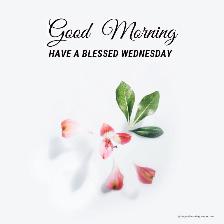 Good Morning Wednesday white flowers Images