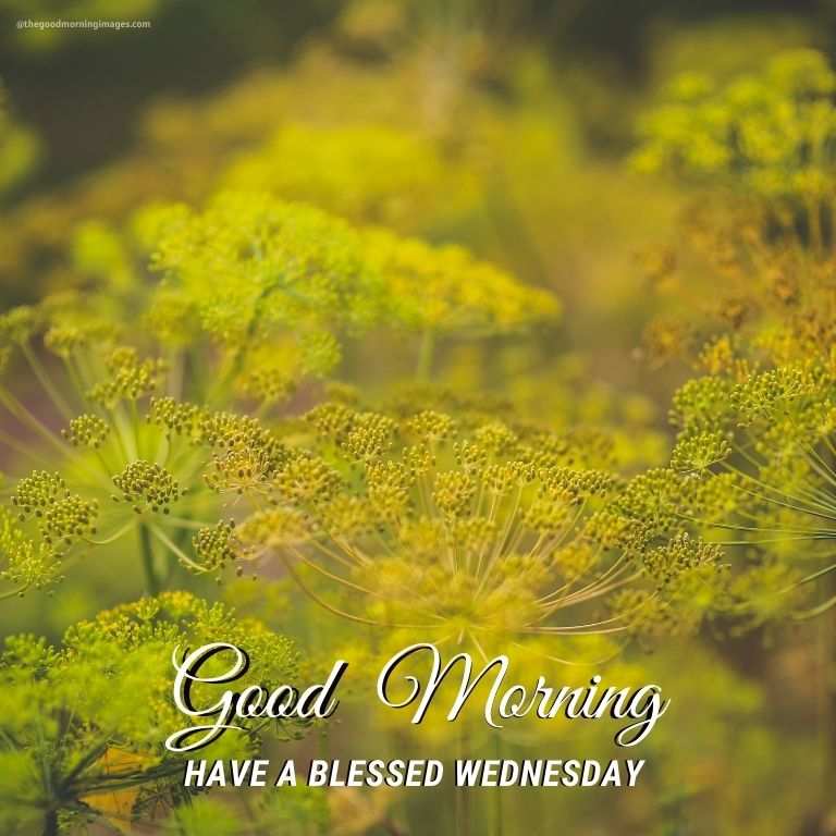 Good Morning Wednesday happy Images