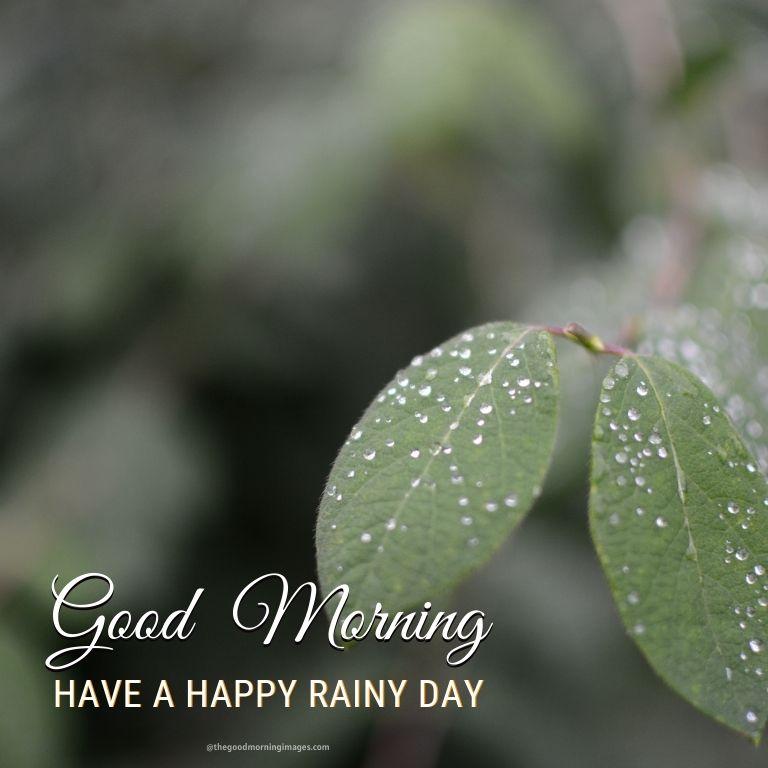 Good Morning Rainy Day Image with trees