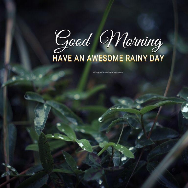 Awesome Rainy Good Morning Photos
