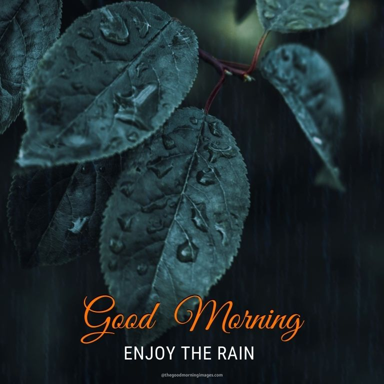 Rainy Good Morning Images with nature