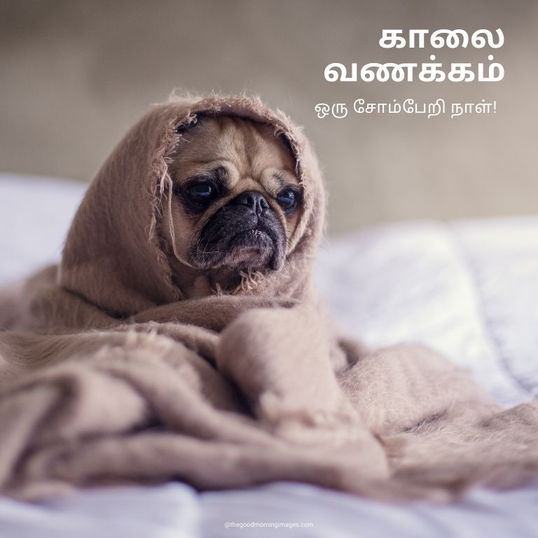 Good Morning funny Images in Tamil