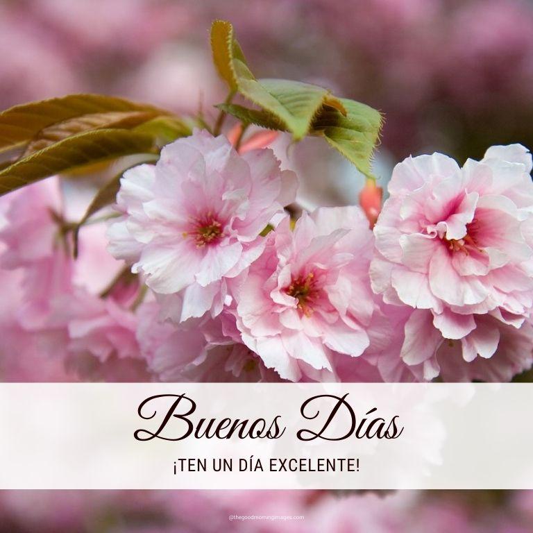 Good Morning in Spanish photos