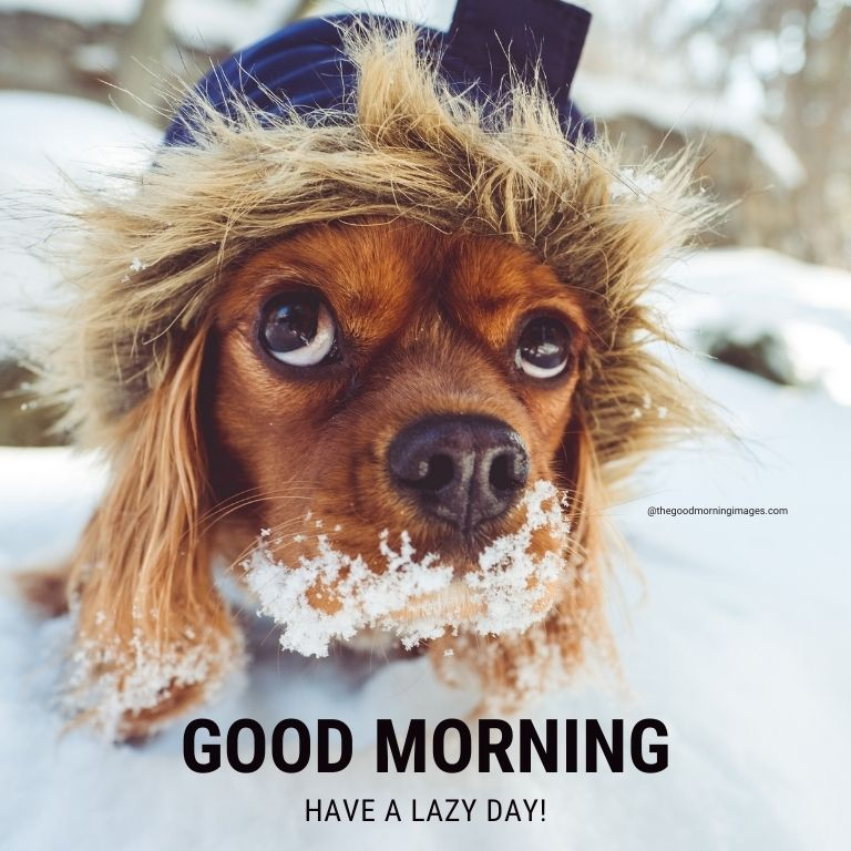 good morning funny winter images
