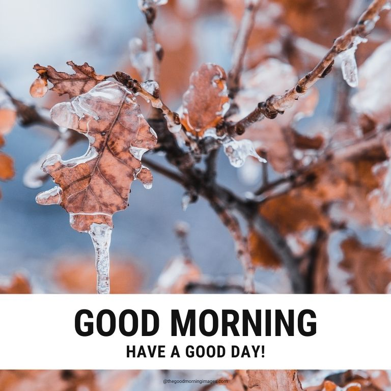 Good Morning Images for Winter