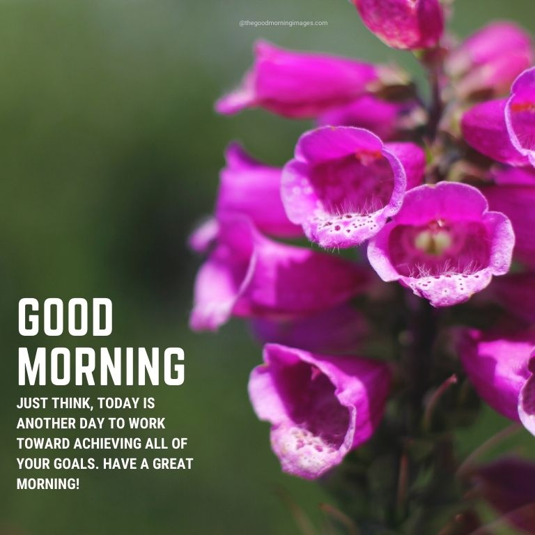good morning pink flowers image with quotes